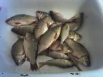 Рыбалка На Будамше