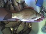 Ещё одна рыбалка на Будамше