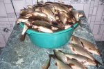 Рыбалка-дело клёвое!