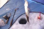 Рыбалка с экскурсией
