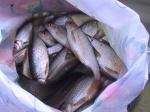 Рыбалка на Ушкоте