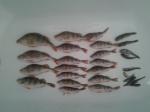 Праздничная рыбалка в 370км.