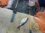 Рыбалка на Ушкате!
