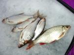 За белой рыбой
