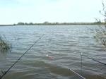 Попытки поймать карпа на Большестепном озере