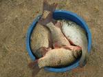 Рыбалка на Караганке