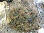 Рыбалка в Междуречье