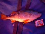 2,3 поездки на зимнюю рыбалку