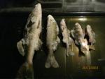Предновогодняя рыбалка