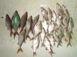 Рыбалка в черте города