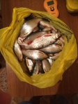 Отчет о рыбалке 08.03.2017 г.